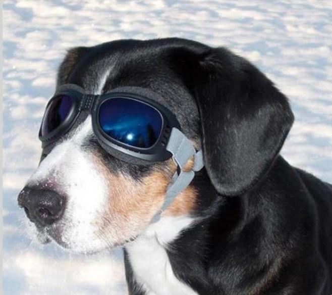 Koiran aurinkolasit