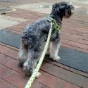 Koiran talutushihna ja valjaat heijastimilla