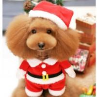Hauska jouluasu saa koirasi muistuttamaan kaksijalkaista joulutonttua! Koiran joulupukuun on ommeltu valekädet, joten eteenpäin talsiessaan koirasi näyttää kävelevältä tontulta.