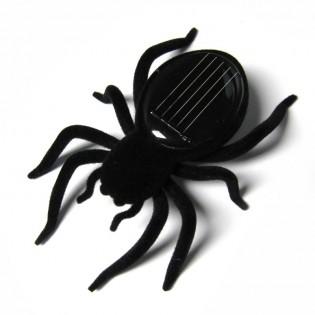 Aurinko hämähäkki