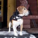 TKStar koiran GPS-paikannin